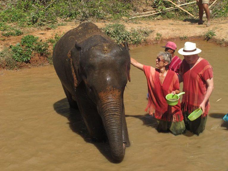 Bangkok Elephant Tour - ElephantsWorld Sanctuary