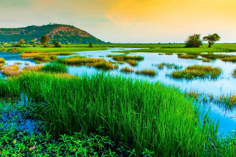 Siem Reap Rice Fields
